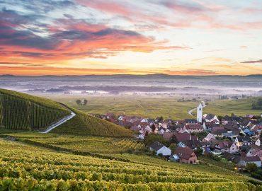 Visiter la Route des Vins d'Alsace