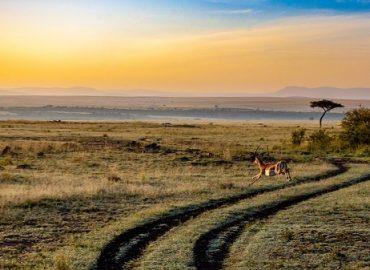 Partir au Kenya : quelle période privilégier ?