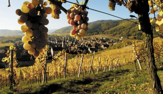 Faire du Tourisme dans les vignes du Grand Est